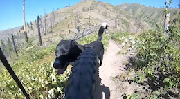 10 Tips: How to Train a Trail Dog