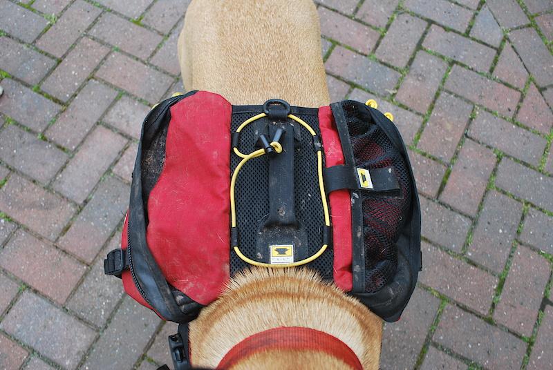 рюкзак коко шанель