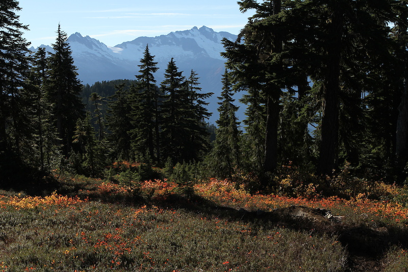 Alpine berm with Tantalus range in the background.