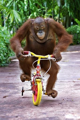 knie fiets blesures