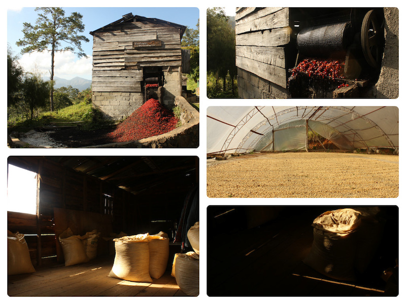 Spirit Mountain organic coffee