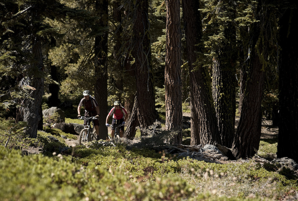 Tahoe in September is all about big trees and temperatures that are cool enough to ride again. Photo by Dan Milner.