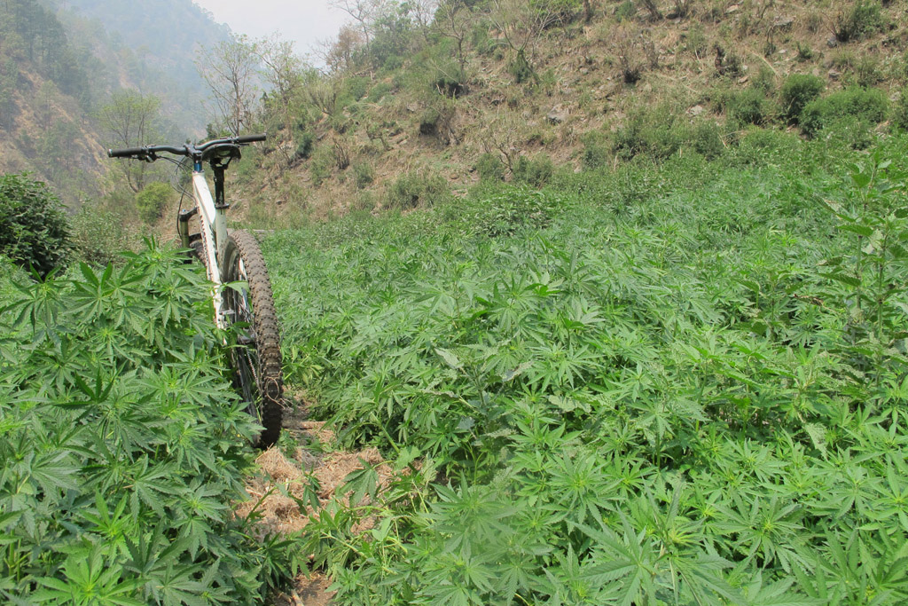 its REAL All the stories you ve heard about the Himalayan Herbs growing in abundance is real