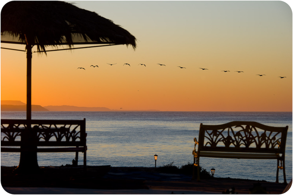 Pelicans at sunrise at Punta San Carlos