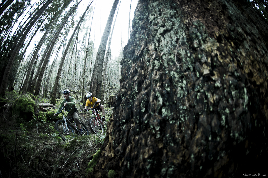 Tig Cross and Sasha Lebaron battle for supremacy amongst 600 year old Fir trees.