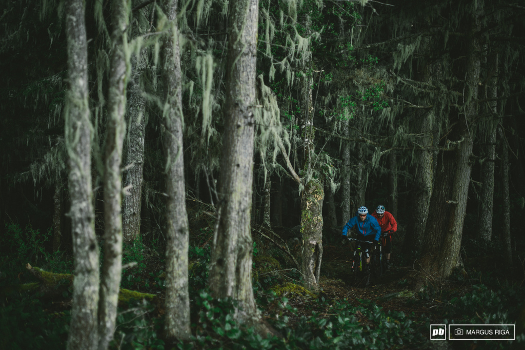 Gully and Hestler exploring the deep dark dank woods in Port McNeill.