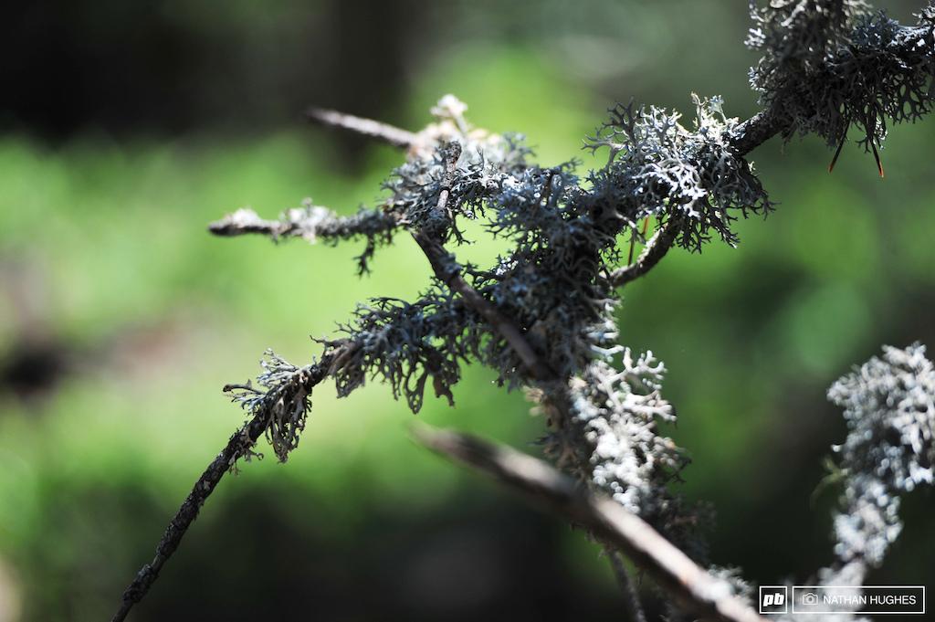 Vallnord Lichen