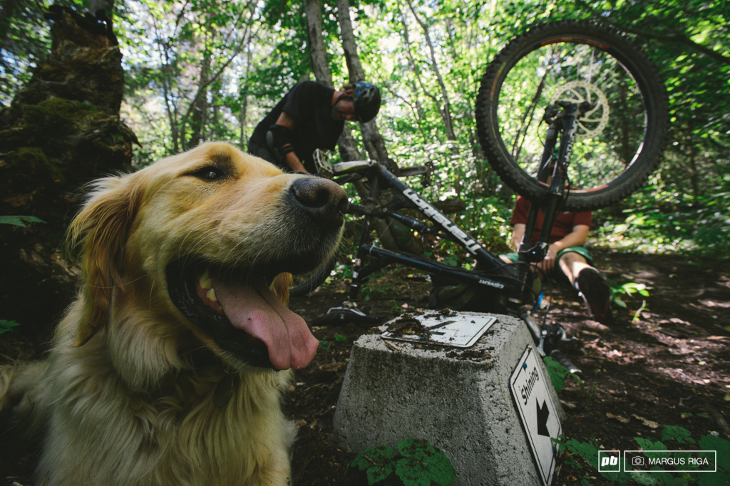 Dogs are happiest on the trails.