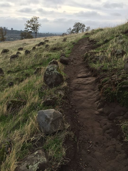 Trail Work in Bidwell Upper Park