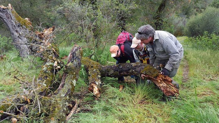 Fernandez Trail Work near Pozo