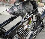 A rat needs a rat.