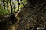"""A small sample of the trails to come. There are a couple of bike park trails, which are wide-open and loose, but the rest of the trails are in the woods and are these perfect dirt ribbons. The soil is simply unbelievable, soft and loose on the surface, but with a damper supportive layer beneath. While the phrase """"all-time"""" is over-used to hell, it really does apply to the ground conditions here."""
