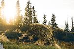 fot; www.wolisphoto.com