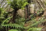 Crankworx Rotorua EWS 1