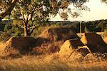 Andreu Lacondeguy's Australian Vacation
