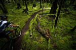 A thin brown ribbon of singletrack leads the rider through a lush forest of electric green.