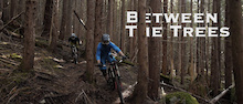 Video: Between the Trees
