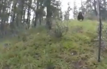 Oh Shit! Grizzly Bear Charges Mountain Bikers