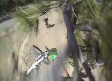 Video: Jumping Into A Tree
