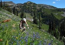 Revelstoke's Keystone Standard Alpine Dreaming (Part 1)