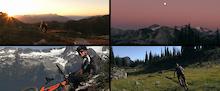 Video: Alpine To Tree Line