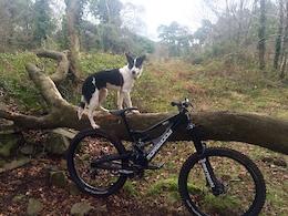 Video: Trail Dog Training