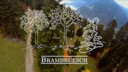 Fall at Brambrüesch Bike Park - Video