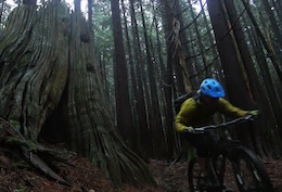 The Dark and Wet Pacific Northwest - Video