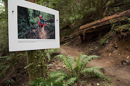 Turning a Trail Into an Art Gallery