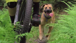 Everyone Needs a Trail Dog - Video