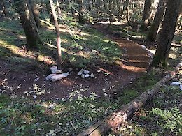 WORCA Calls For Donations to New Climbing Trail