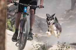 Round Up: 14 of the Best Trail Dog Videos