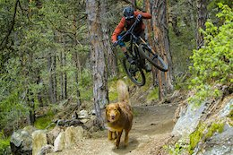 Video: Balu's All-time Trail Dog Shred in 'Paws & Wheels'