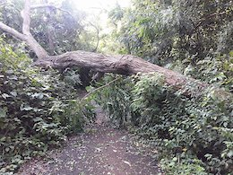 Examples of widespread trail destruction caused by hurricane María.