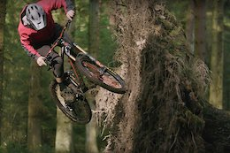 Video: Chris Akrigg vs a Tree