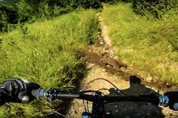 Video: Mountain Biker Narrowly Avoids Hitting 2 Bear Cubs