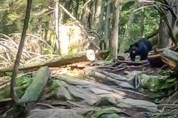 Video: Bear Chases Mountain Bikers for 1km on Mount Seymour