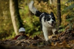 Video: Fall Leaves & A Furry Friend in this Trail Dog Rip with 'Ken and Ukee'