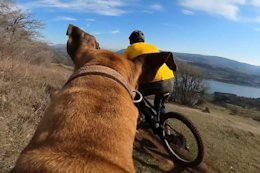 Video: A Trail Dog's Perspective on Covid-19
