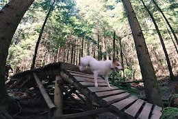 Video: Riding the North Shore With Levi the Trail Dog