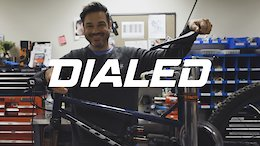 Video: Fox Dialed - Learning to Adapt