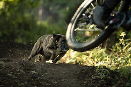 Video: Casey Brown & R-Dog Shred Trails with Chee the Trail Dog