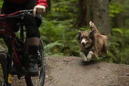 Video: 'A Dogs Tale' - The Ultimate Story For Trail Dog Lovers