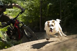 Round Up: 6 of the Best Trail Dog Videos from the Past Year