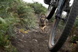 Video: Exploring the Relationship Between Rider & Trail Dog in 'Going Nowhere'