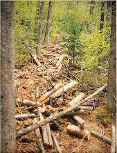 Help build new trails in CANMORE!