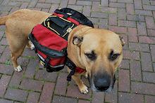 MountainSmith Dog Packs.