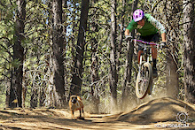 Pinkbike Poll: Dogs on the Trail?