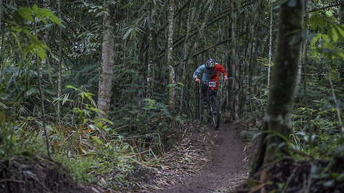 Through the bamboo  #bambooland #mtbindonesia #commencalmeta