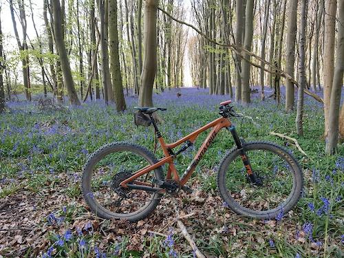 Bike & Bluebells